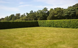 Kent Valley - Hedge Cutting