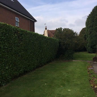 Hedge cutting in Bearsted