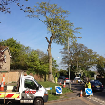Tree surgery in Boughton Aluph