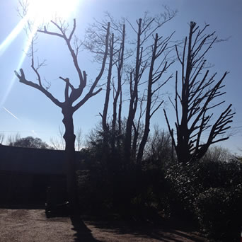 Tree Surgery in Hollingbourne