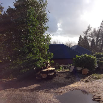 Kent Valley - Tree Surgery in Stede Hill, Harrietsham